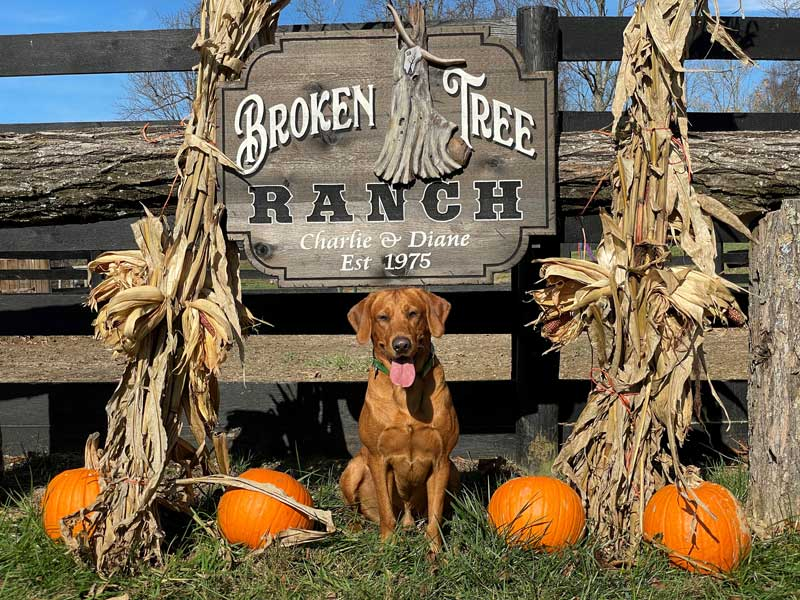 Broken tree ranch sign with a dog sitting in front of it